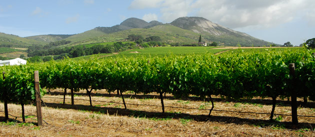 The benefits of using a fertiliser spreader for your wine farm